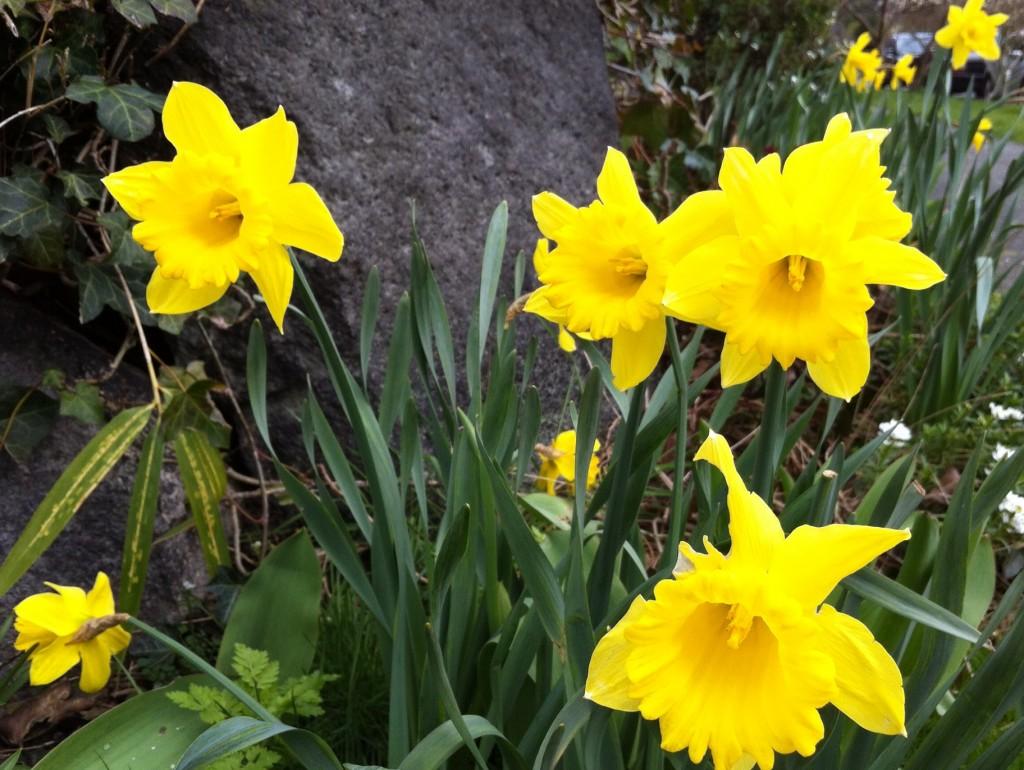 spring 2