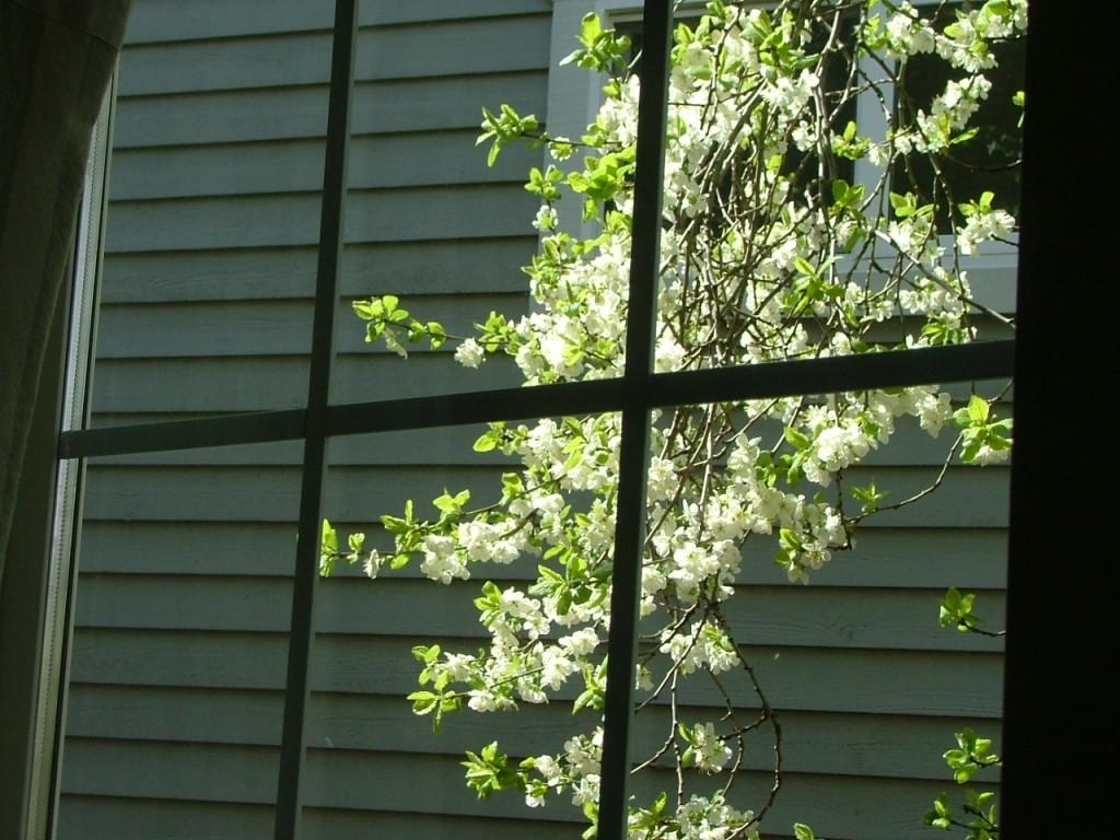16 Some Garden Shots - Spring 2008 001