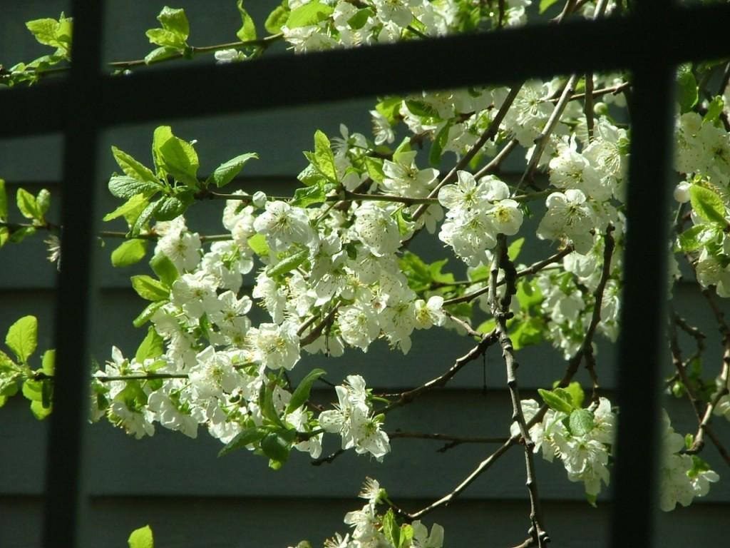 17 Some Garden Shots - Spring 2008 002