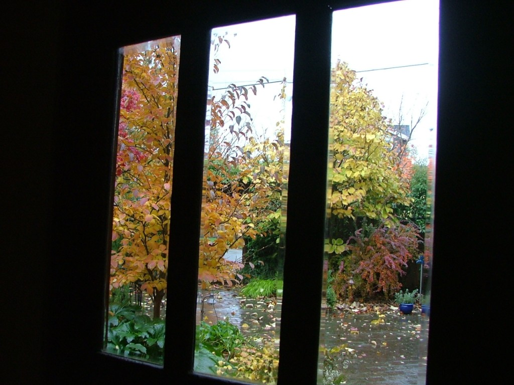 Leaves and Windows November 2006 001