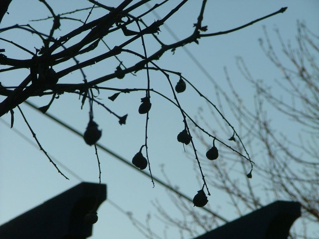 07 Tree Scene January 2008 006
