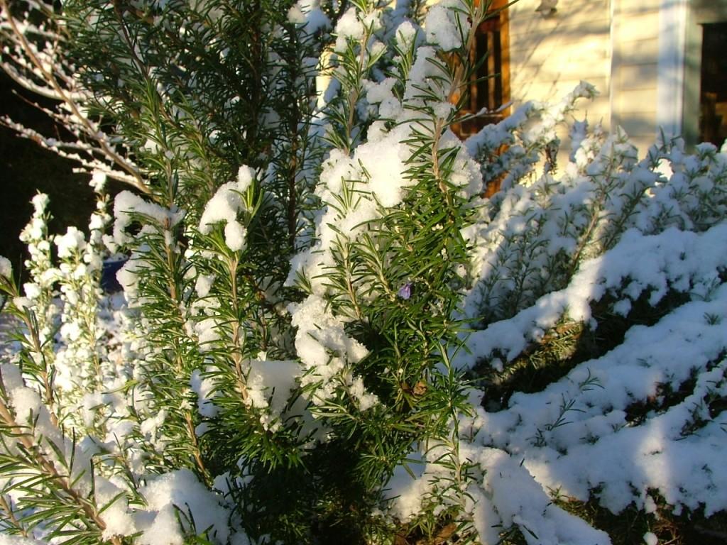 January 2007 Snow Scenes 038