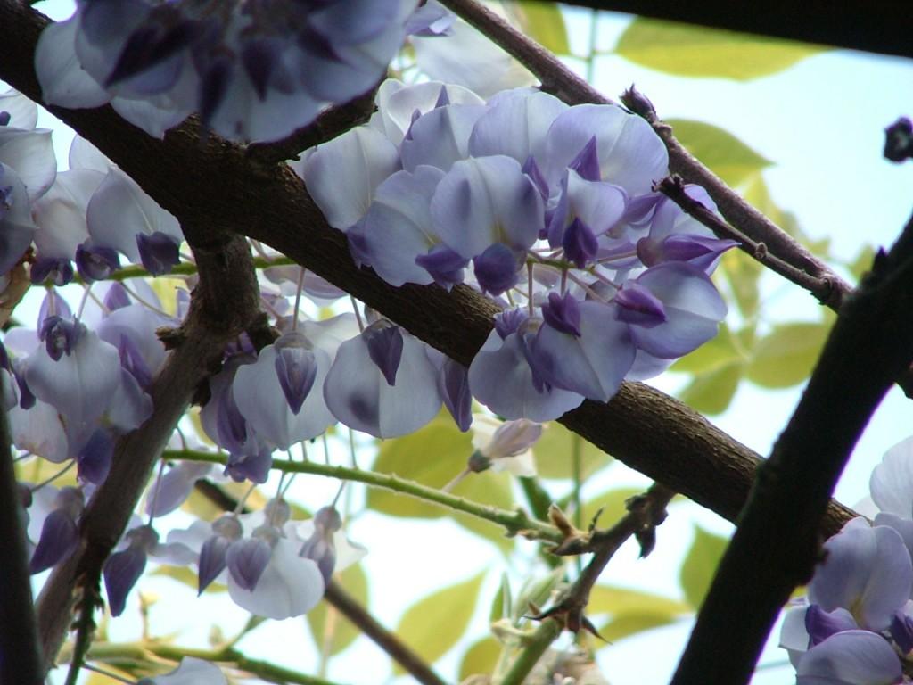 21Garden - Spring 2007 3